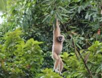 Khao Sok Discovery, Elefanter &  Jungle Lake Safari