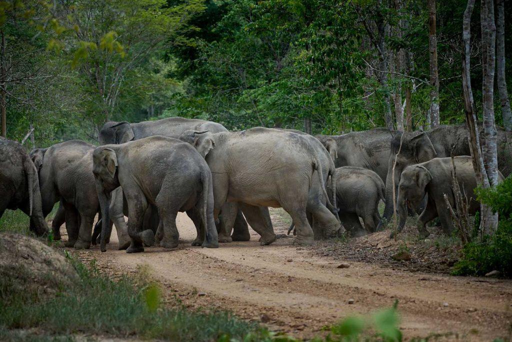 Wild Elephant watching @ Kui Buri