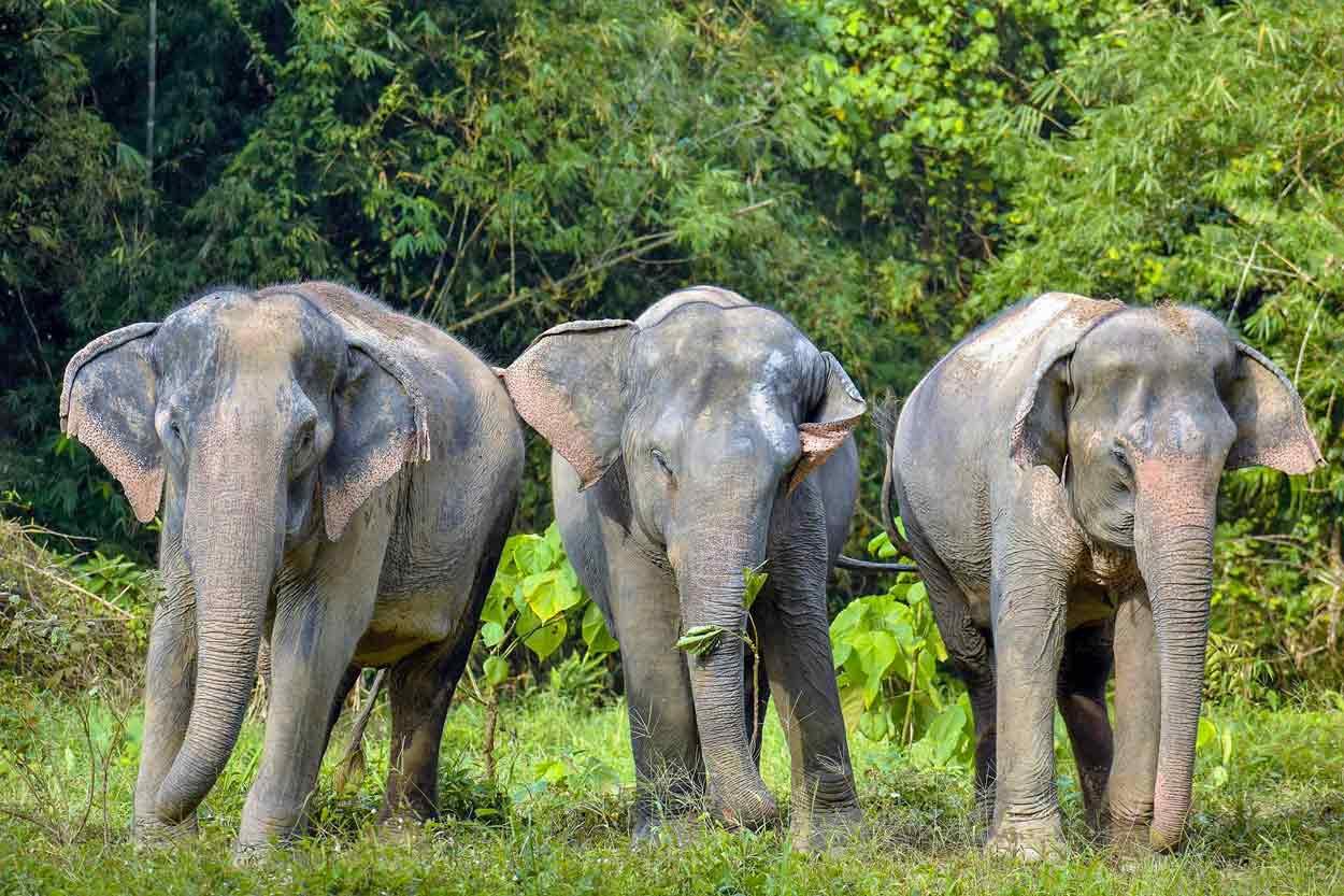 PHUKET ELEPHANT SANCTUARY  -  Phukets første fristed for elefanter