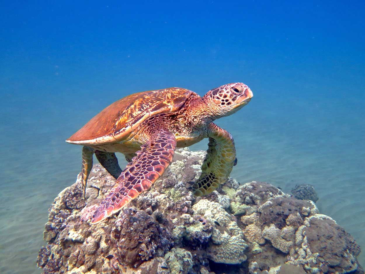 """Turtle Island - en """"once in a lifetime"""" oplevelse i Malaysia"""